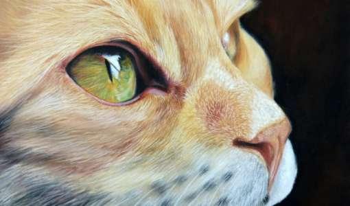 Katzen und Wildkatzen malen in Pastell